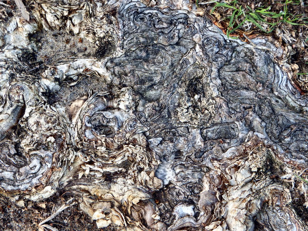 exposed tree root patterns2: abstract textured exposed root system of an Australian Melaleuca