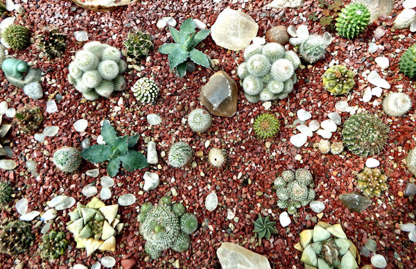 cacti & succulent gardens35: cacti and succulent varieties in specialised cactus garden