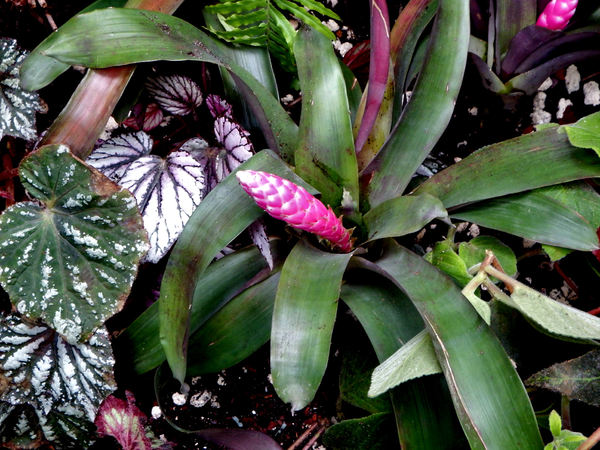bromeliad background2: variety of bromeliad flowers and foliage