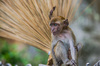 Monkey: Squirrel Monkey