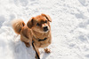 snow dog: this my little doggy, she love the snow.i make this photo at a walk