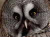 Mr. Wiseguy: Owl