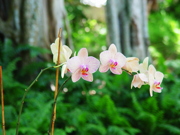 orchid 5: orchid