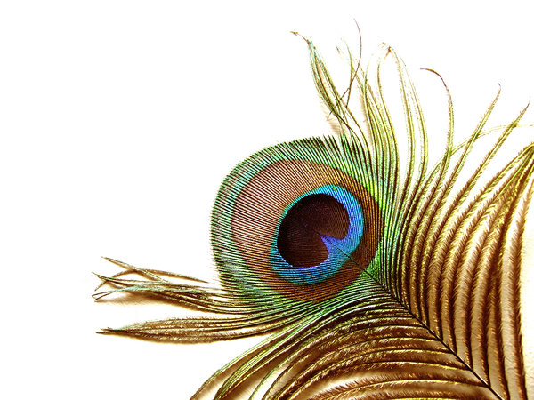 The eye of a peacock: Finepix F30------------