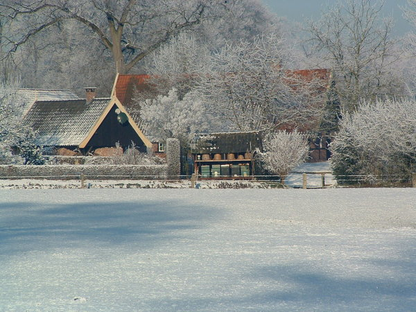 Dutch farmhouse in the snow: typical dutch farmhouse in winter.