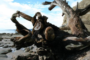 Driftwood 3: Taken on the north shore of Auckland. July 14th, 2007.