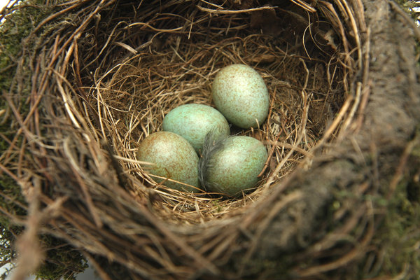 An Amazing Piece of Nature!: I found this nest in my garden. Unfortunately the mother did not return and I decided to make a picture of it... an amazing piece of nature!