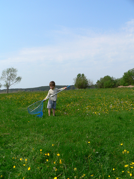 boy with sweep-net 1: Little child with a sweep-net in a meadow, early summer in Riga (Latvia)
