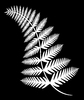 Fern 4: An illustration of a fern.