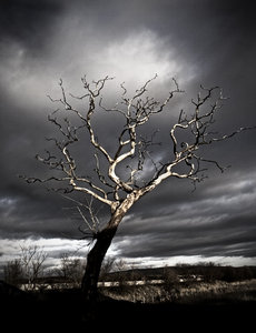 Dead Tree: Spooky dead tree against stormy sky, Glasson Dock, UK.
