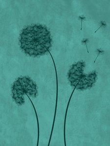 Dandelions Blue: Dandelions silhouette over blue grungy background.