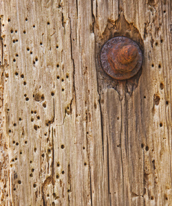 Woodworm: Old barn doorway riddled with woodworm.