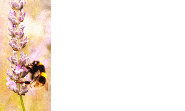 Nature Banner 5: A banner or card with a nature theme - bee.