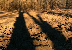 Growing shadows-: Trees and shadows thereof growing together-