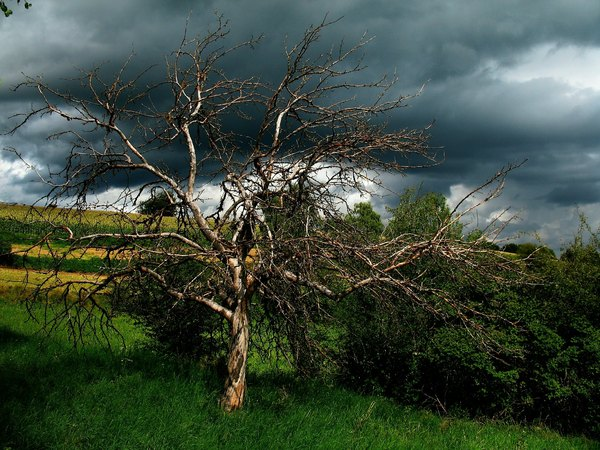 Rainy Sunday: Sunlit scenery of a thunderstorm approaching on a rainy sunday afternoon. Dead apple tree against the sky.