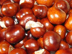 Autumn Fruits: Kids Pleasure: Chestnuts