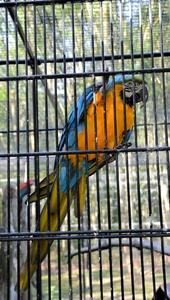 Parrot: Parrot behind bars