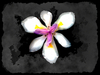 Arty Iris 2: A grungy, arty fairy iris. Makes a really nice cover or card. Please use according to the image licence. You may prefer this:  http://www.rgbstock.com/photo/o3oTE6w/Fairy+Iris+Border+3 or:  http://www.rgbstock.com/photo/o3BdbJi/Fairy+Iris+Border+11