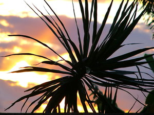 Silhouette: Plant silhouetted against the setting sun. I don't know if it can be used, but it had eye appeal for me.