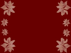 Floral Border 14: Floral border on blank page. Lots of copyspace.