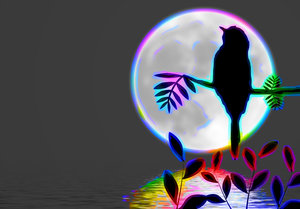 Bird Silhouette on Branch 3: A bird sitting on a branch silhouetted against the bright moon, with the moonlight reflected in water, with rainbow colours to highlight. Perjaps you would prefer these:  http://www.rgbstock.com/photo/moF90lI/Bird+Silhouette+on+Branch+2   or