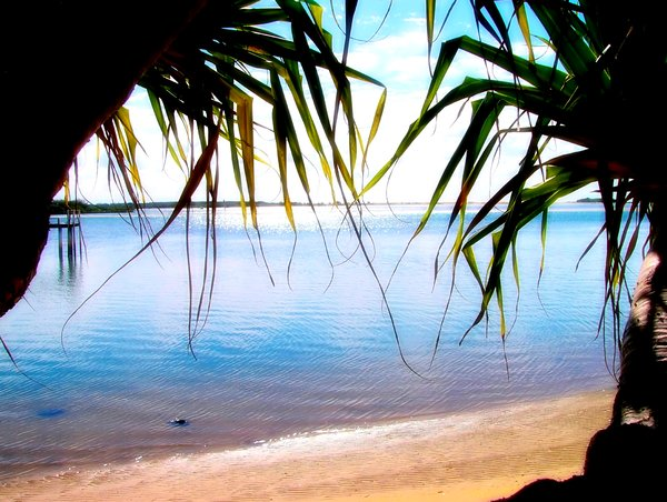 Paradise 2: Semi-tropical beach on the coast of Queensland, Australia. Framed by pandanus trees and a glorious sky.