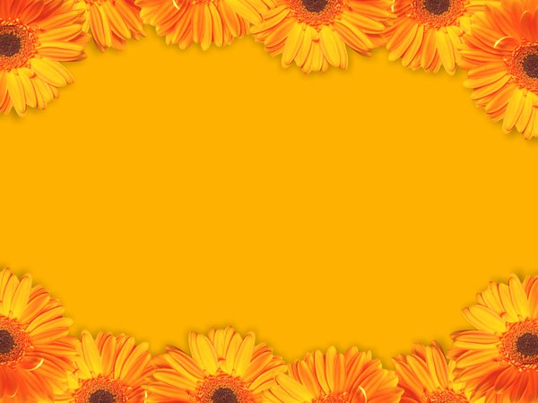 Floral Border 43: A border of yellow gerbera flowers. Lots of copyspace.