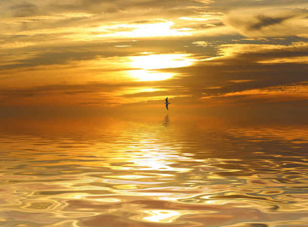 Golden Sunset: A seagull swoops over a glorious sunset reflected in the water. You may prefer:  http://www.rgbstock.com/photo/2dyXyz7/Flight+Over+Water+3  or:  http://www.rgbstock.com/photo/2dyWbt4/Tropical+Waters+2