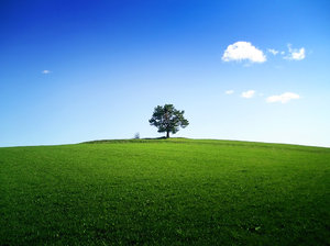 A tree on the horizon: Small tree on the horizon of a green field or a meadow under almost blue sky with a single cloud