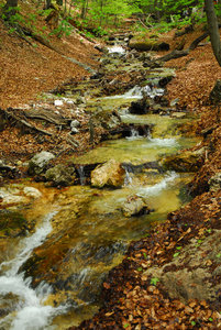 Autumn in Small-Fatra: Autumn in the forest on Small-Fatra in Slovakia