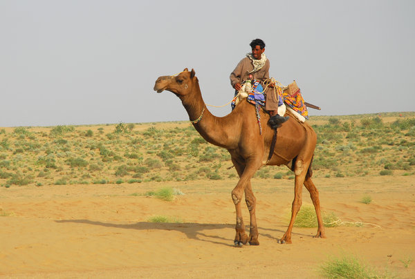 Incredible India: Camel rider in Tar Desert, Rajastan, India