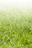 Grass gradient: grass background