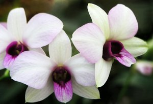 Flower splendor 1: pink flowers - orchids