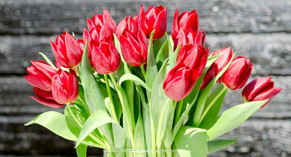 Red tulips: Vase with red tulips against black background