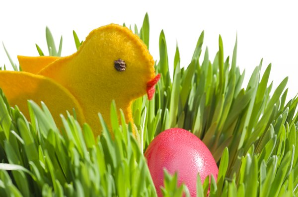 Little felt chick and  egg: yellow felt bird and red Easter egg
