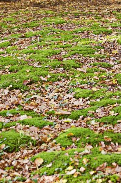 Soft forest floor: Moss and leaves on a forest floor